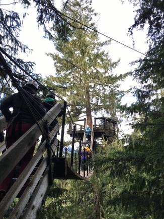 Ziplining across the treetops